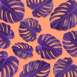 Pattern purple tropical leaf monstera  flat lay  on pastel orange background. Summer concept art. Minimal surreal. Stock Photography