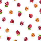 Pattern of raspberry painted watercolor. Fruit seamless pattern for menu and desserts, restaurants and cafes. Pattern of raspberry painted watercolor. Fruit Stock Images