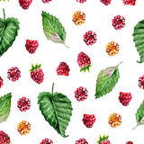 Pattern of raspberry painted watercolor. Fruit seamless pattern for menu and desserts, restaurants and cafes. Royalty Free Stock Photography