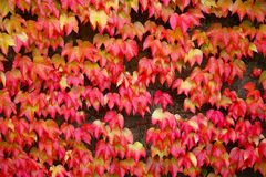 Pattern of autumn fall leaves on a building front facade Royalty Free Stock Image