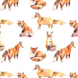Pattern red foxes different watercolor. This is seamless pattern with hand drawn watercolor foxes in different poses  on white Stock Images