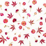 Pattern of red leaves and pink roses on white background. Flat lay, top view. Royalty Free Stock Photography