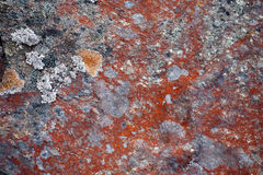 Pattern of red lichen Stock Images