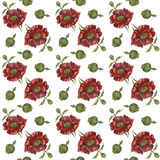 Pattern with red poppies on white background. Watercolor picture of a flower. Pattern with red poppies on white background Stock Image