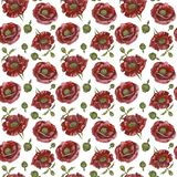 Pattern with red poppies on white background. Watercolor picture of a flower. Pattern with red poppies on white background Royalty Free Stock Photos
