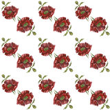 Pattern with red poppies on white background. Watercolor picture of a flower. Pattern with red poppies on white background Stock Photos