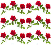 Pattern red rose on a stalk of green leaves Royalty Free Stock Photo