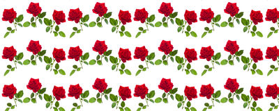 Pattern red rose on a stalk of green leaves Royalty Free Stock Photography