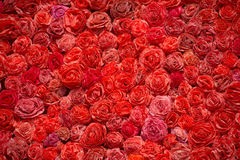 Pattern of red roses as background Stock Image
