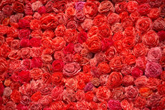 The pattern of red roses as background Royalty Free Stock Image