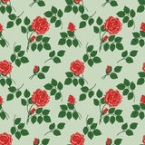 Pattern with red roses Royalty Free Stock Image
