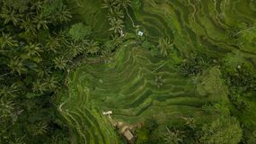 Geometric pattern in rice fields in bali, indonesia stock image