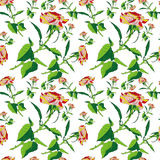 Pattern rose Royalty Free Stock Photography