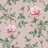 Pattern with rose illustration Stock Photos