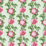 Pattern with rose illustration Royalty Free Stock Photography