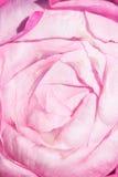 Pattern of rose patel. Stock Image