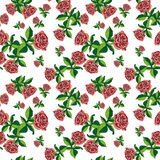 Pattern rose on white small Stock Photography