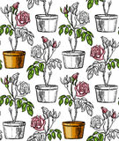 Pattern with rosebushes bush in flowering pot. Royalty Free Stock Images