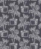Pattern with rosebushes bush in flowering pot. White rosebush on gray background. Stock Images