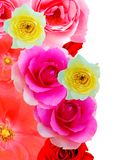 Pattern Roses Stock Photos