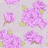 Pattern with roses and butterflies in background Royalty Free Stock Images
