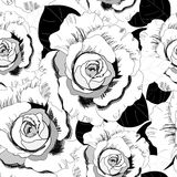 Pattern of roses Royalty Free Stock Photography