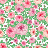 Pattern of roses Stock Photos