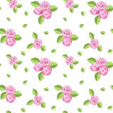 Pattern with roses. Royalty Free Stock Photos