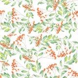 Pattern of rowan Royalty Free Stock Image