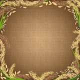 Sackcloth background with the rice foodstuff at the edges. Pattern of sackcloth fabric with gradient shadow and rice foodstuff Royalty Free Stock Photos