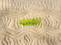 The pattern on the sand. Of the wavy lines and a branch of the ash tree Royalty Free Stock Image
