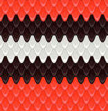 Pattern the scales scarlet kingsnake Stock Image
