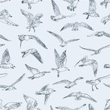 Pattern of seagulls Royalty Free Stock Photos
