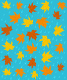 Pattern,seamless of  autumn leaves Royalty Free Stock Images