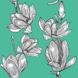Pattern with blooming magnolia. Hand drawn. vector illustration