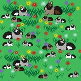 Pattern seamless of guinea pigs and colors. Illustration Royalty Free Stock Photo