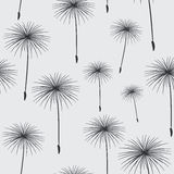 Pattern seamless texture background fluffy dandelion black on gr Royalty Free Stock Images