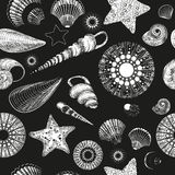 Pattern with seashells (black and white) Stock Image