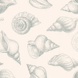 Pattern of seashells Royalty Free Stock Image