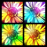 Pattern set with abstract flowers daisy. Vector Illustration Royalty Free Stock Images