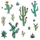 Pattern set with cacti and flowers on white background vector illustration