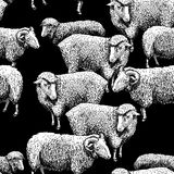 Pattern with sheep Stock Photography