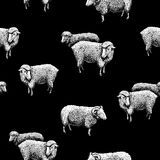 Pattern with sheep Stock Photo
