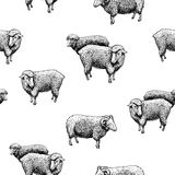 Pattern with sheep Stock Image