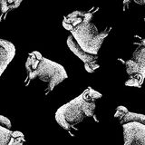 Pattern with sheep Stock Images