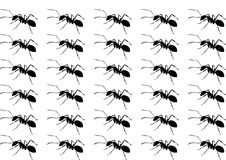 Pattern of silhouette black Ant Stock Image
