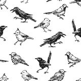 Pattern of the sketches of different wild birds. Seamless background of the wild birds sketches Royalty Free Stock Images