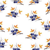 Pattern with a sloe sprig. Seamless pattern with a sloe sprig  on a white background Royalty Free Stock Photos