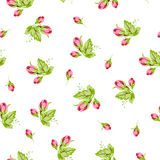 Pattern with small buds roses Stock Photos