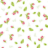 Pattern with small buds roses Stock Image